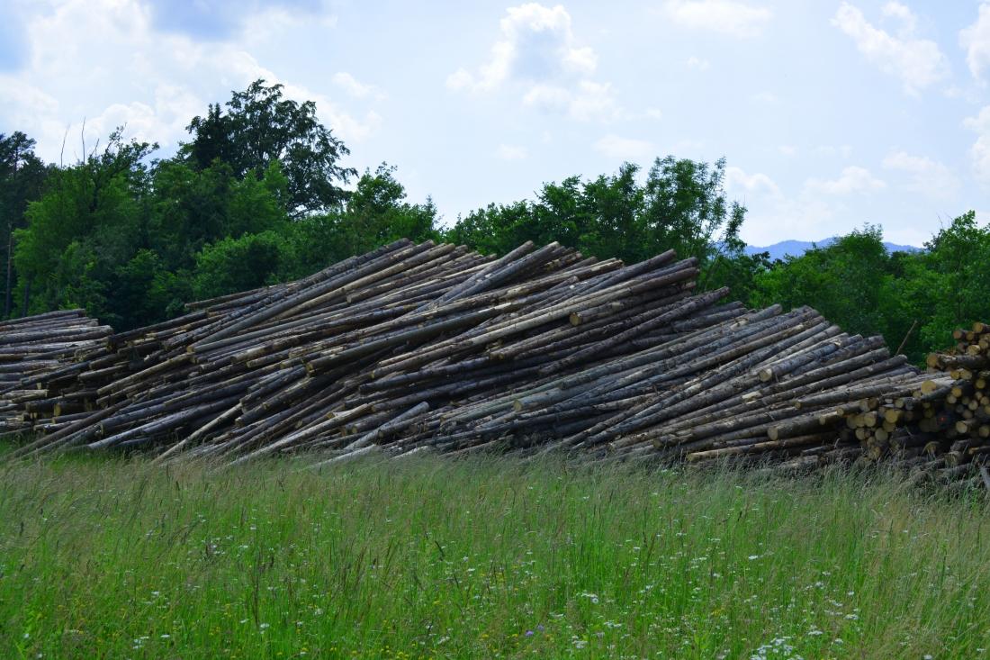 stockvault-tree-trunks151291